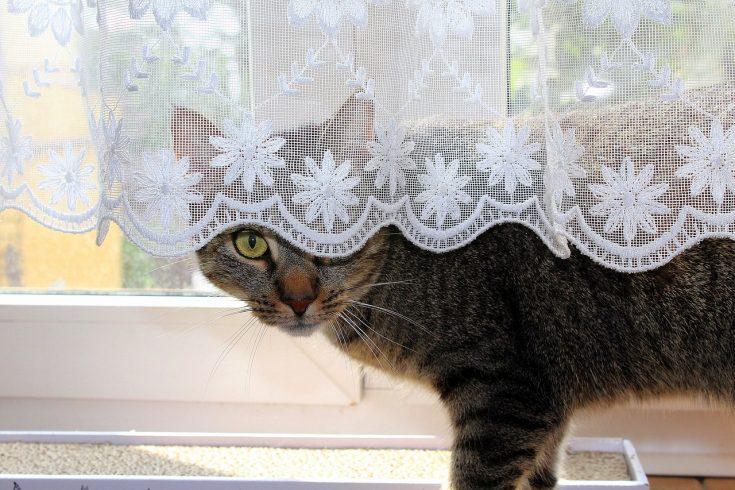 cat, hiding, pet