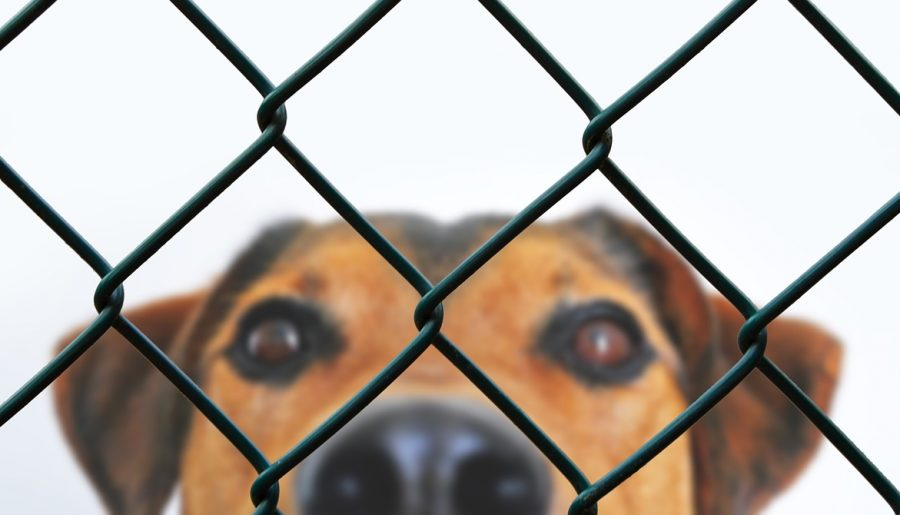 dog, fence, grid