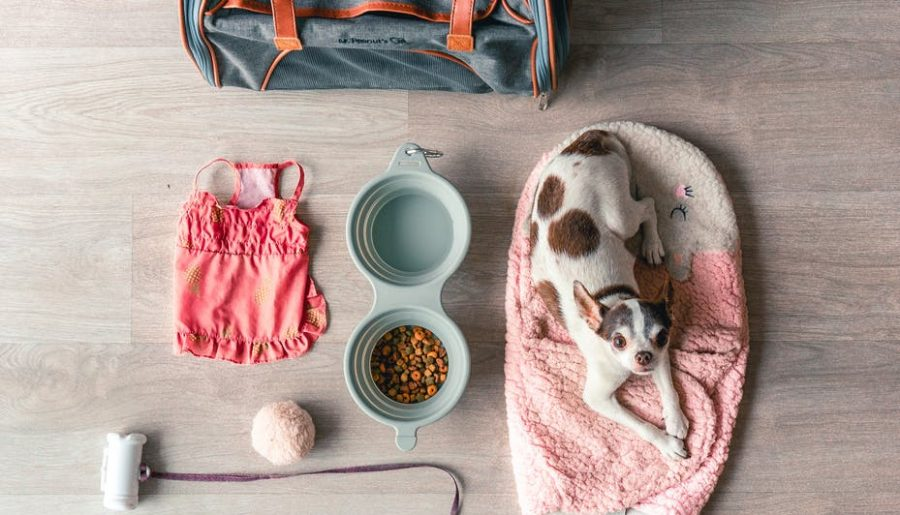 flat lay shot of a dog and animal accessories